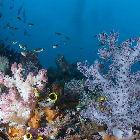 Ocean coral