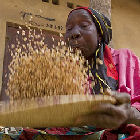 A cowpea seller on a market in Africa