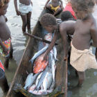 Small-scale fisheries, Lavella Island