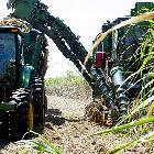 Harvesting crops in Brazil