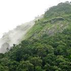 Pristine forest, Karnataka, India