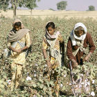 Women picking cotton in South India